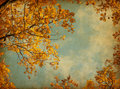 Autumn leaves on the sky background photo in retro style added paper texture oak Stock Images