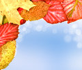 Autumn leaves on soft background Stock Photography