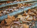 Autumn leaves on steps Royalty Free Stock Photo