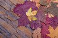 Autumn leaves in a stone wall Royalty Free Stock Images