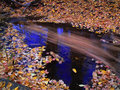 Autumn leaves in stream Royalty Free Stock Photos