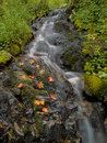 Autumn leaves by a stream Stock Images