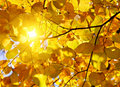 Autumn leaves and sun Royalty Free Stock Image