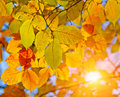 Autumn leaves and sun Stock Images