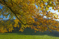 Autumn leaves in sunlight Royalty Free Stock Photo