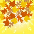 The autumn leaves on sunny background. eps10 Royalty Free Stock Photos