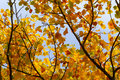 Autumn Leaves Sunny Fall Landscape Colorful Foliage Background Royalty Free Stock Photo