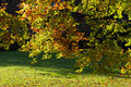 Autumn Leaves Sunny Fall Landscape Colorful Foliage Background Royalty Free Stock Photo
