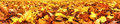 Autumn leaves, super wide banner Royalty Free Stock Photo