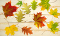 Autumn leaves on the table Royalty Free Stock Photo
