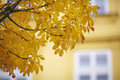 Autumn leaves on a tree Royalty Free Stock Photo