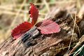 Autumn leaves on a tree trunk Stockbild