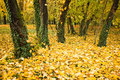Autumn leaves and trees Royalty Free Stock Image