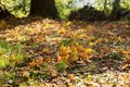 Autumn leaves under the trees in the park Royalty Free Stock Photo