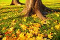 Autumn leaves under the autumn trees at sunset - autumn park in sunshine with autumn leaves on the ground Royalty Free Stock Photo