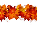 Autumn leaves vector background with colored Royalty Free Stock Photo
