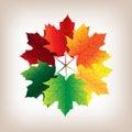 Autumn leaves vetor Imagens de Stock
