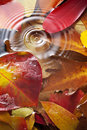 Autumn leaves water drop full of color under with a single and ripples Stock Photos