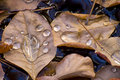 Autumn leaves with water drops Stock Photo
