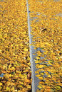 Autumn leaves on the way