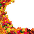 Autumn leaves and white background colorful with copy space Stock Images