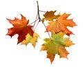 Autumn Leaves On White Backgro...