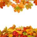 Autumn  Leaves On White Backgr...