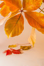 Autumn leaves on white background orange Royalty Free Stock Image