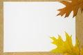 Autumn leaves on a white sheet Royalty Free Stock Photo