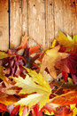 Autumn leaves on wood Stock Image