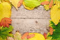 Autumn leaves on wood Royalty Free Stock Photos