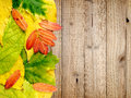 Autumn leaves on wood wooden background Royalty Free Stock Photo