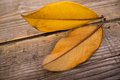 Autumn leaves wooden background Stock Photo
