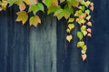Autumn leaves and wooden fence in fall Royalty Free Stock Photo