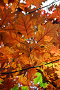 Autumn leaves yellow and orange on a tree in Stock Images