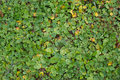 Autumn little plants bush background texture pattern Royalty Free Stock Photo