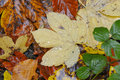 Autumn macro from a colorful foliage Stock Photos