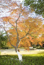 Autumn maple Stock Photography