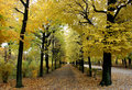Autumn maple alley Royalty Free Stock Photo