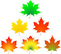 Autumn maple leaf. Stock Images