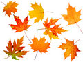 Autumn maple-leaf Stock Photos