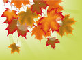 Autumn maple leaves background with Stock Images