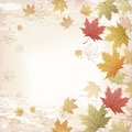 Autumn maple leaves background japanese pattern file contains clipping mask with un cropped images gradient transparency Stock Image