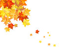 Autumn maple leaves background vector illustration without transparency eps Royalty Free Stock Photo