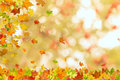 Autumn maple leaves falling down on natural background Stock Image