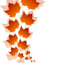 Autumn maple leaves isolated on white background Royalty Free Stock Photos