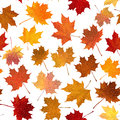 Autumn maple leaves, seamless background. Stock Photos