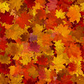 Autumn maple leaves, seamless background. Royalty Free Stock Photo
