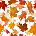Autumn maple leaves, seamless background. Royalty Free Stock Image