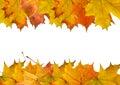 Autumn maple slip Stock Images